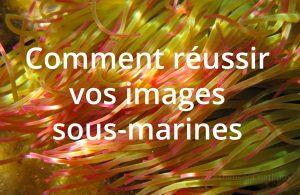 Les astuces du Chat Roux pour réussir de belles images sous-marines